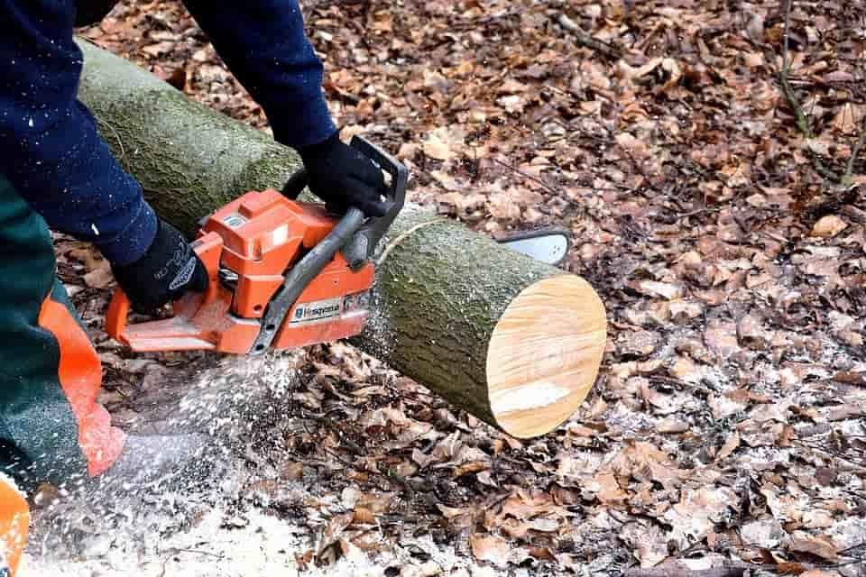 A faaprításban kivételes láncfűrész
